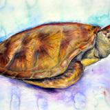 ウミガメ水彩画:制作時高校3年17歳女の子
