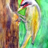 鳥キツツキ:水彩画_制作時小学4年男の子