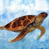 ウミガメ水彩画:制作時中学2年13歳女の子