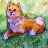 柴犬:水彩画_制作時中学1年男の子