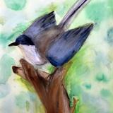 鳥はく製 水彩 パステル 石田 流楓 作 制作時小学6年生