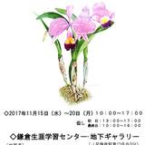 第20回ボタニカルアート教室展開催*鎌倉生涯学習センター:15日〜20日 イメージ